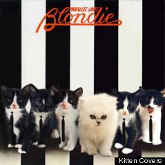 blondie kitten cover