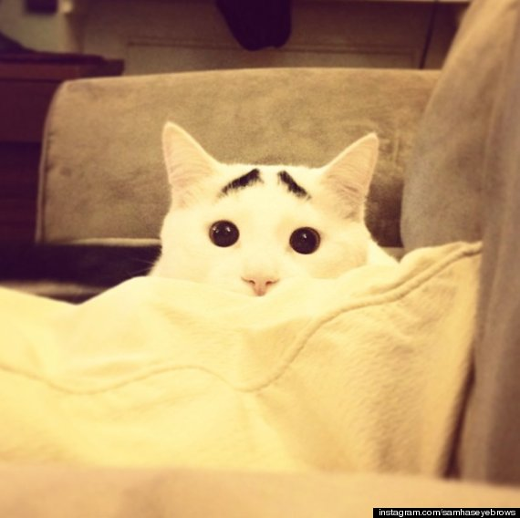 sam eyebrows cat