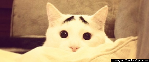 SAM CAT WITH EYEBROWS