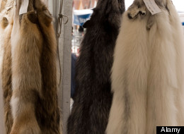 canada goose jackets kills animals
