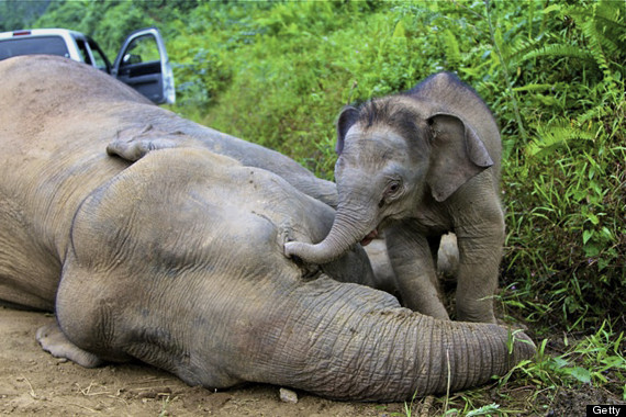 joe the orphaned elephant