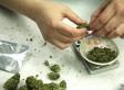 Canada's Marijuana Laws Upheld By Ontario Court