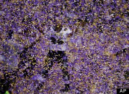 Ravens Win Super Bowl 3431