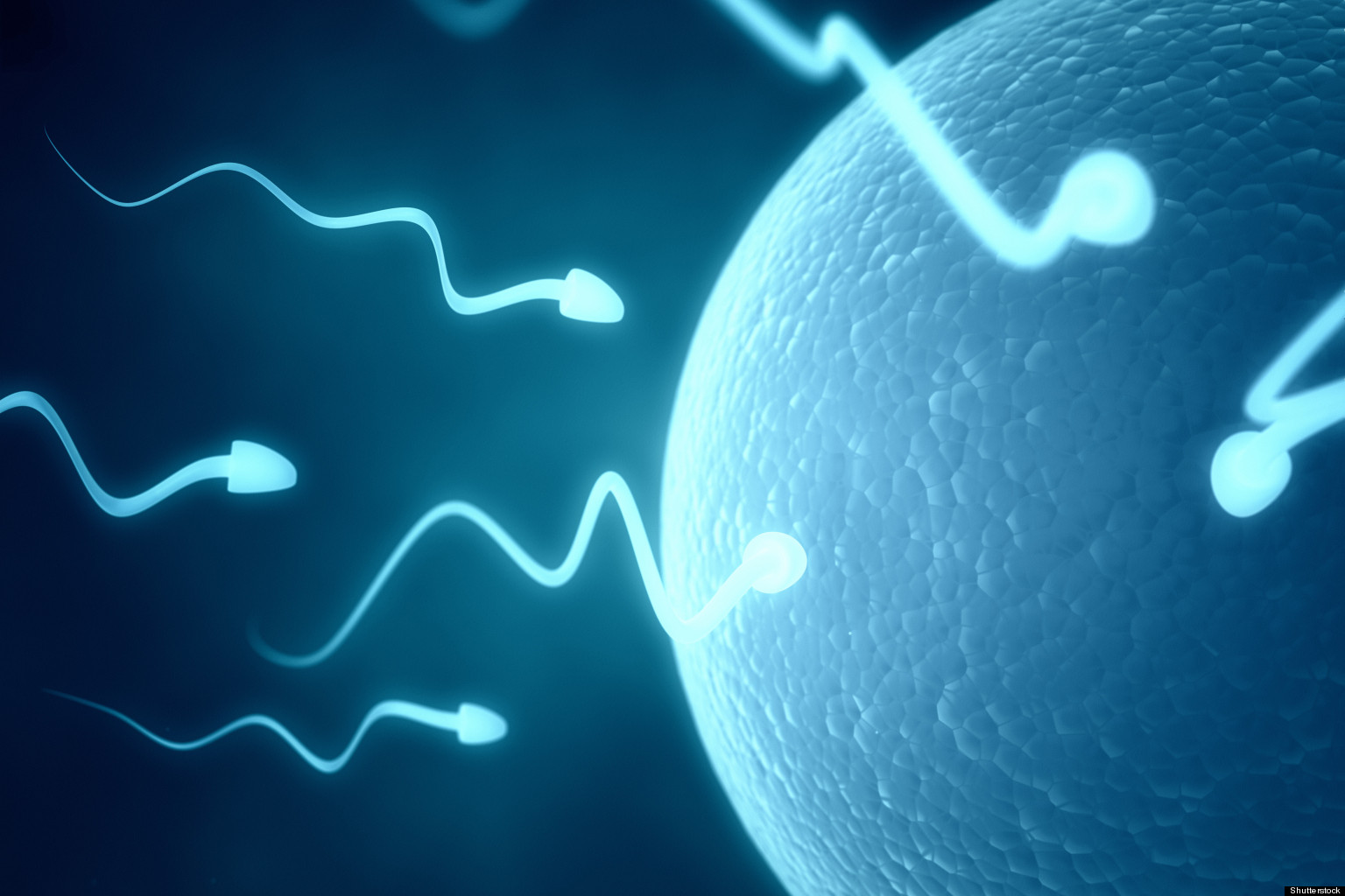 Can count motility sperm sperm think