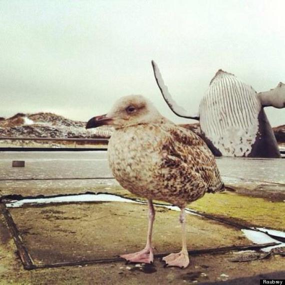 whale photobombs bird