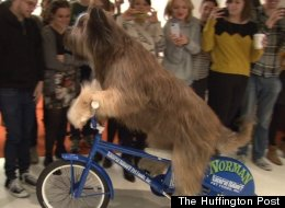 Dog On A Bike
