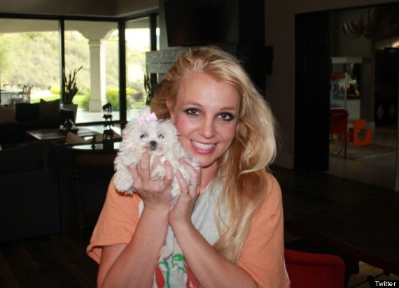britney spears new dog