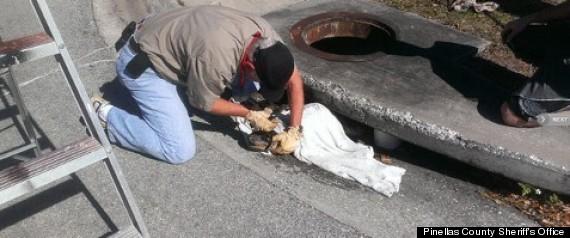 florida gator storm drain