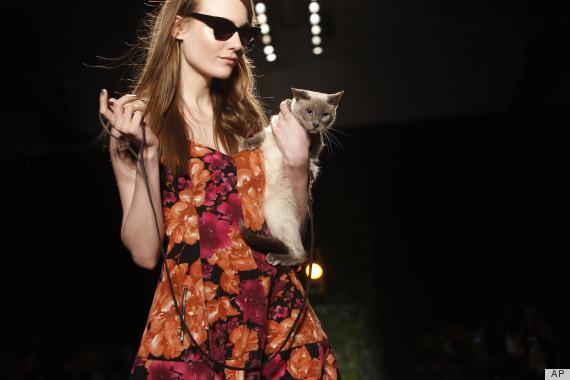 cat runway