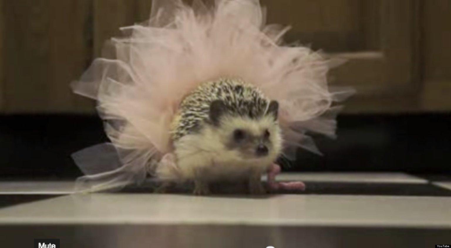 Hedgehog Baby Clothes