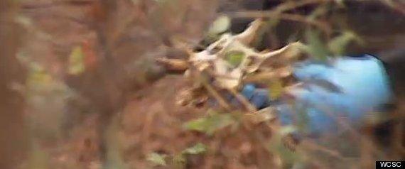 loney garrett dog bones dead dogs