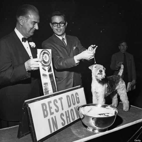 concurso belleza perros