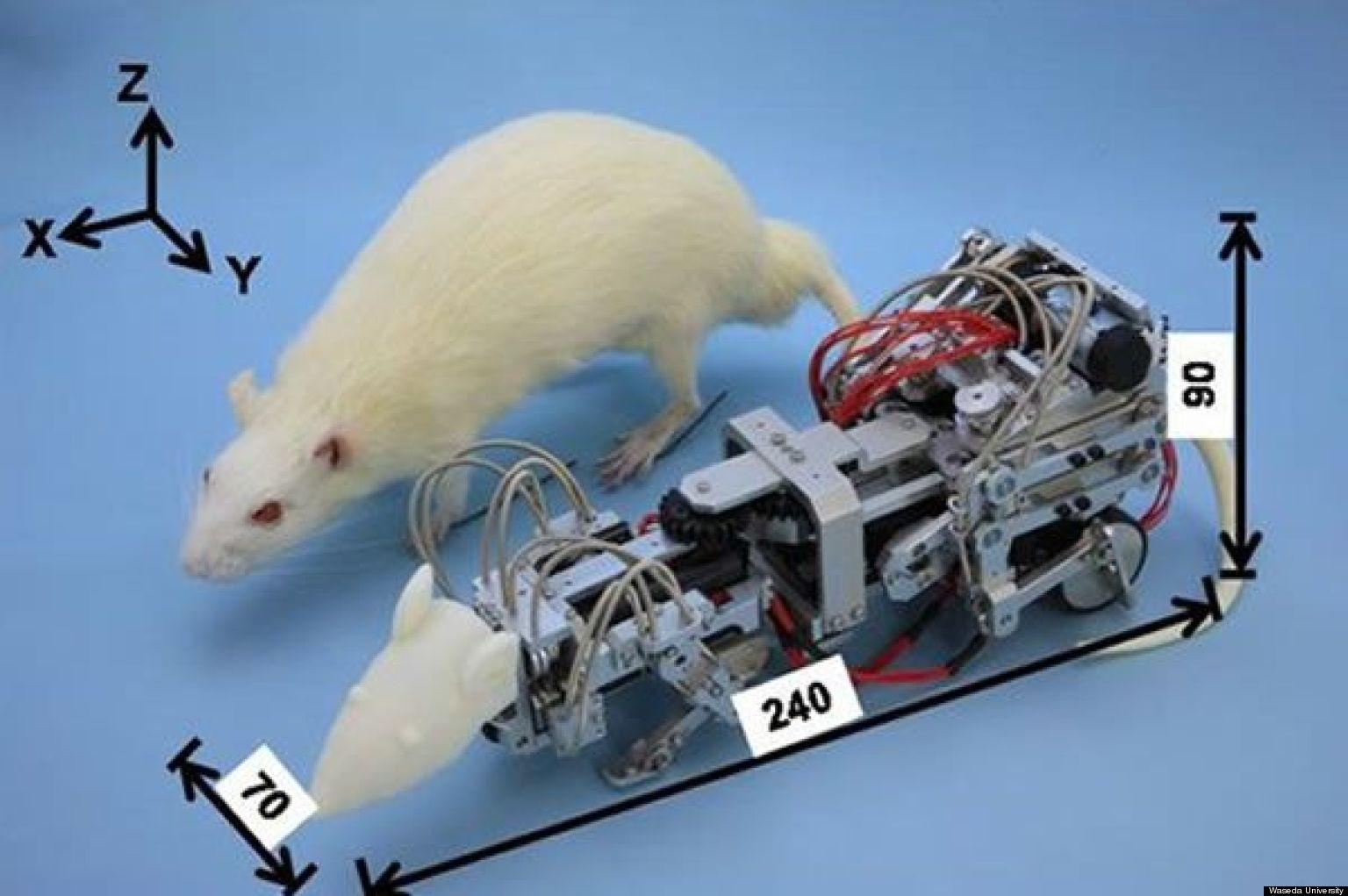 Как сделать робота из мыши