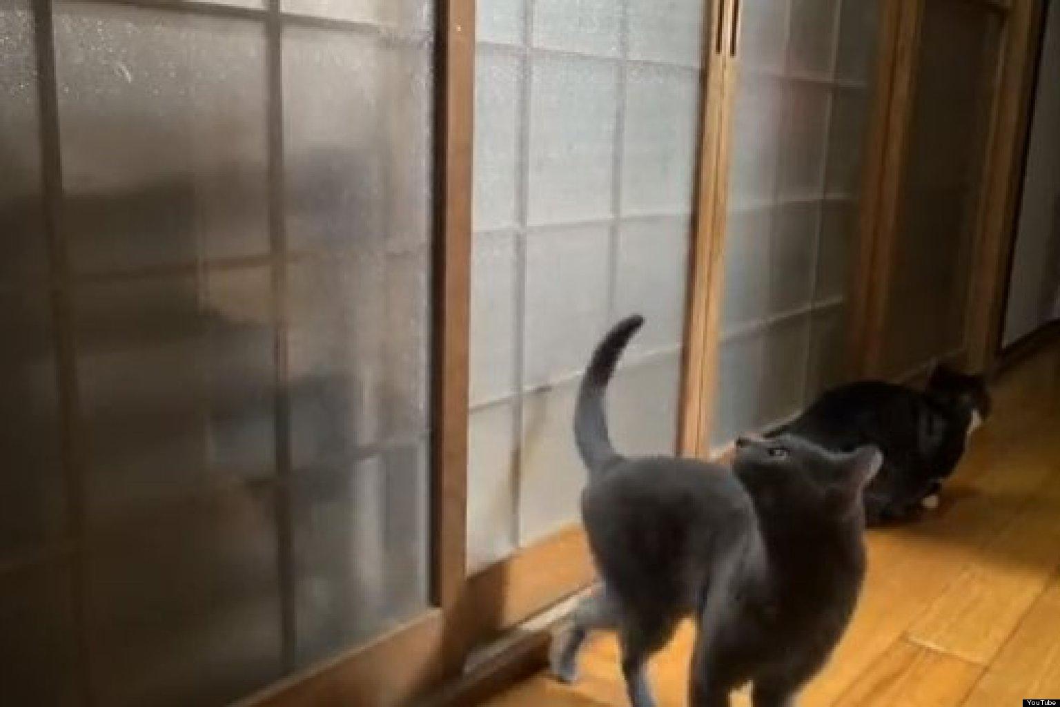 Cat Knocking On Door : Persistent cat s hilarious knock on bedroom door video