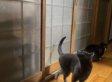 Persistent Cat's Hilarious Knock On Bedroom Door (VIDEO)