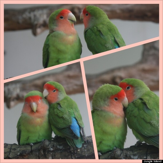 love bird collage