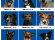 Dogs Recognize Faces Of Their Own Species, Video Experiment Shows