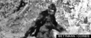 BIGFOOT DNA