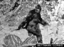 Bigfoot DNA Under The Microscope: A Big, Hairy Mess