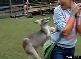Recopilación de ataques de animales